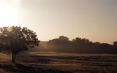 fog_110606