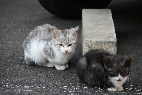 香梅咲外的小貓