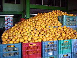 agropecuario.oranges