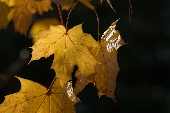 Autumn :: Click for previosu photo