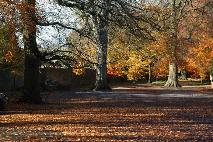 Autumn:: Click for previous photo