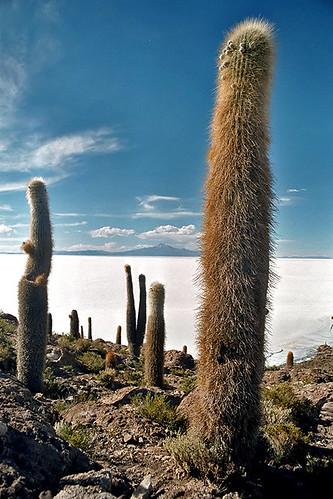 مناظر خلابة لبحيرة الملح ببوليفيا 304077626_cb3a84ea59