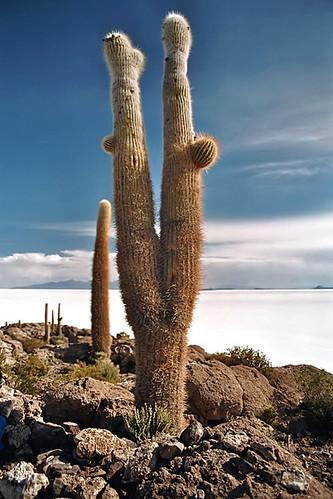 مناظر خلابة لبحيرة الملح ببوليفيا 304078267_029a4ae3e0