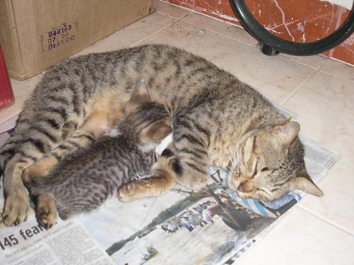 Sneha sleeping with her kitten