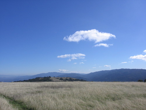 Meadow, Black Mountain summit