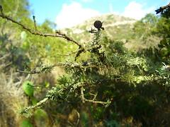 heavy_lichen