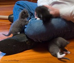 three climbing kittens