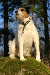 Oskar håller utkik