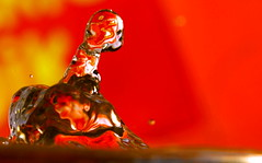 Live and death in a water drop photo by kees straver (will be back online soon friends)