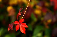 Autumn colors photo by Gerard.R.