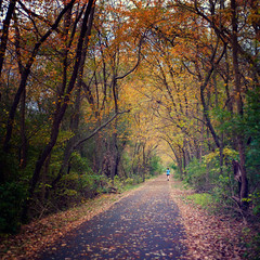 297/365: Boulevard of Autumn Leaves photo by pixelmama