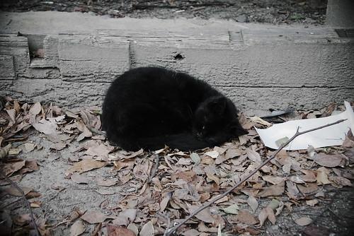 猫まんじゅう