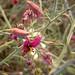 Flower (3823)