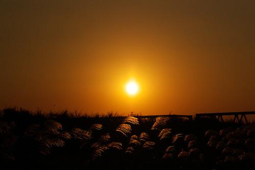 cohrus in the sun