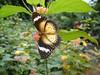butterfly_feeding