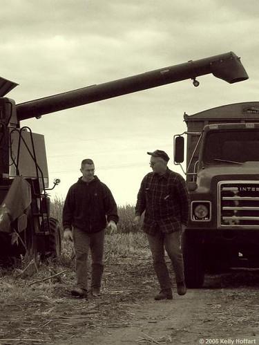 Harvesting Corn III