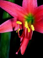 pollen photo by NesQuarX