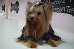 Lola, de meest verwende hond in de UK