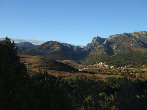 vigne avec Gorges d'Héric et Caroux