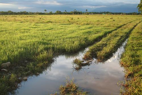 Los Llanos colombianos