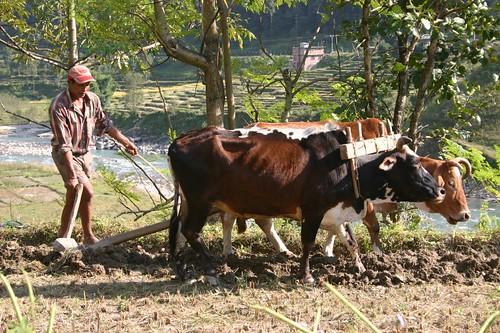Nepali agriculture anno 2006