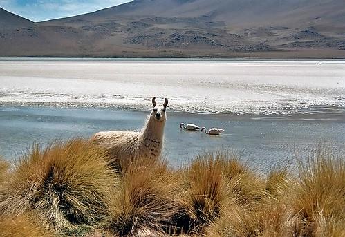 مناظر خلابة لبحيرة الملح ببوليفيا 304078263_2a3da300d2