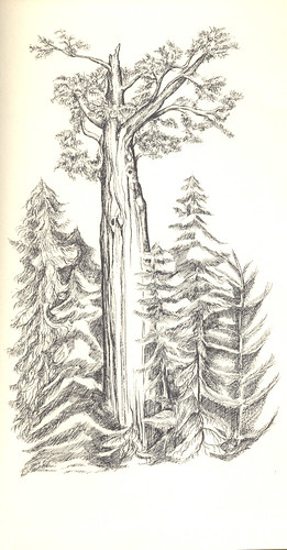 trees illustration, 1966