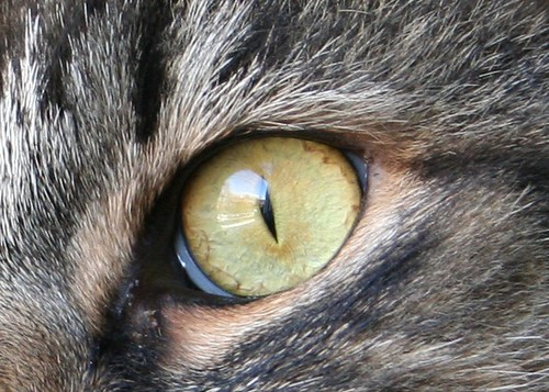 4202-window in a cat's eye