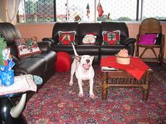 Scuba at home 004