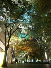 Autumn Tokyo - 1