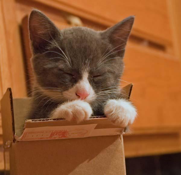 little Grayling in a little box