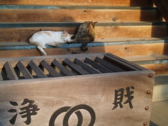 鬼子母神〜護国寺20061203 026