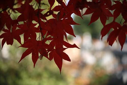 紅葉 in Matsubushi town