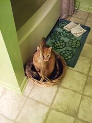 Morris at Home 2