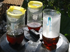 Wasp Traps