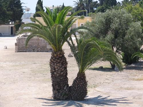 Cute palms