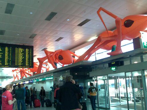 Ants at the Dublin Airport