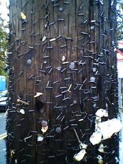 Porcupine Phone Pole