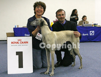 QL9T1401_Sloughi_ at_dog_show