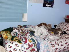 Messy Bed, Two Cats