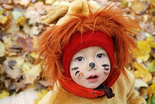 The wonderful lion!