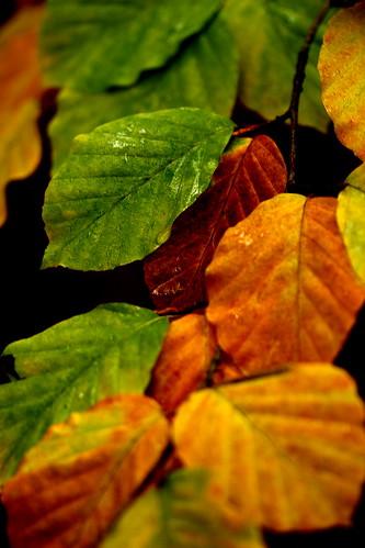 Colours of Autumn #3