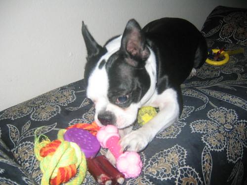 tanner and his new princess bone