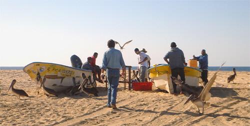 Buying fish in Punto Lobos