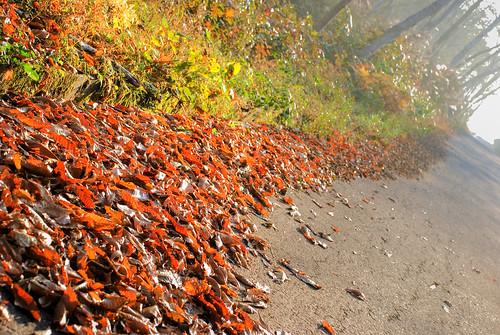 長野 白馬 - Fallen leaves (HDR)