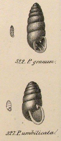 Iconog1835