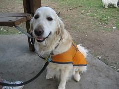 Winona the Guide Dog