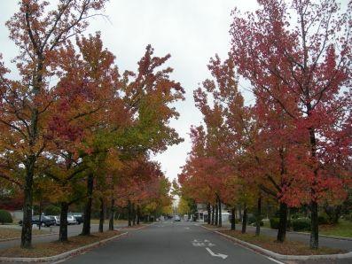 sur le campus de l'université de Okayama
