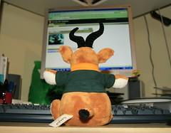 2006-10-24 teddybok at computer