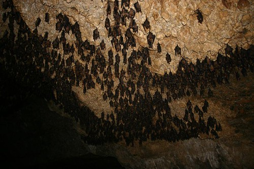 Appropriately, this cave is named The Bat Cave...Jesus!